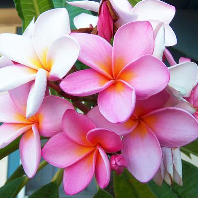 Lomi Lomi Nui - Massage